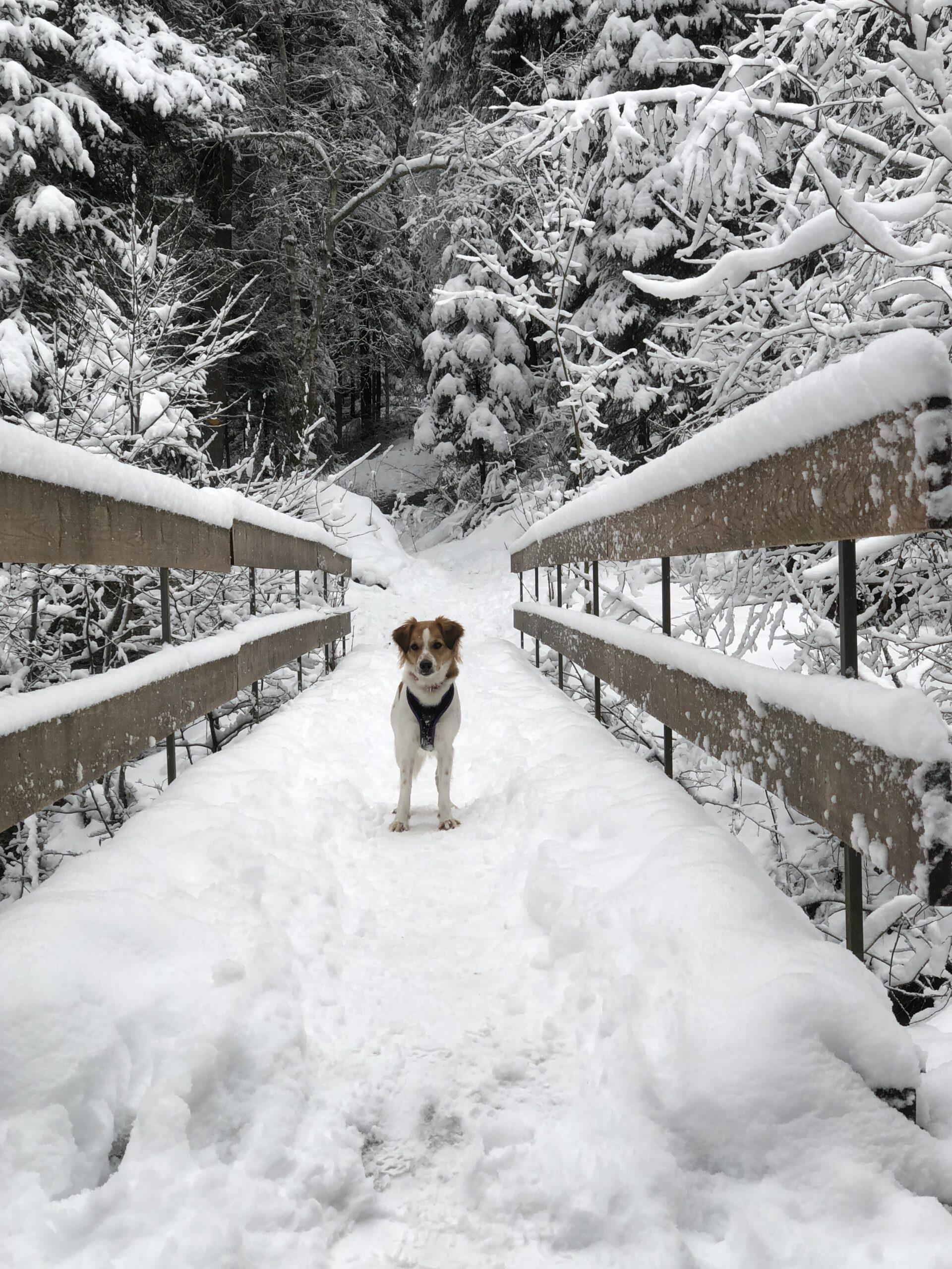 Im Schnee Winter 2020