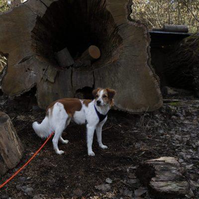 Farina vor der hohle Baum